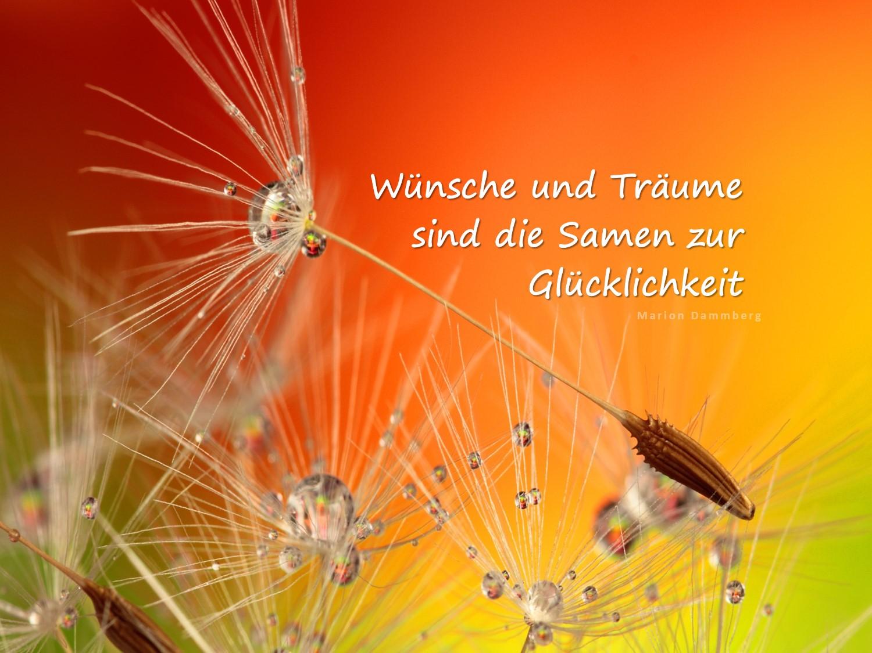 Wünsche und Träume sind die Samen zur Glücklichkeit. BewusstSEINs Coaching mit Marion Dammberg Wege zur Glücklichkeit zum Glück, Erfolg, mehr Freude, Wohlstand, mehr Freude,