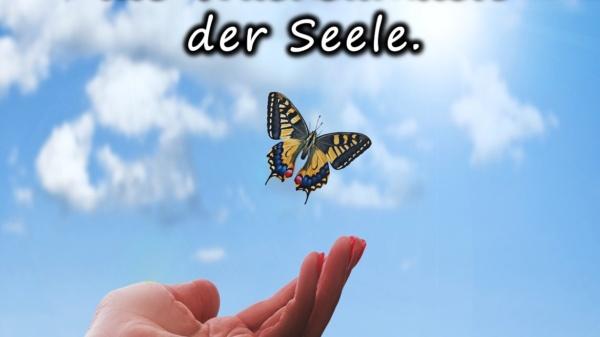 Dankbarkeit ist die Wachsamkeit der Seele. - - BewusstSEINs Wege der Glücklichkeit, Marion Dammberg, BewusstSEINs Life Coach