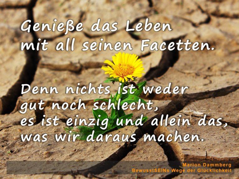 Geniesse das Leben mit all seinen Facetten. - BewusstSEINs Wege der Glücklichkeit, Marion Dammberg, BewusstSEINs Life Coach