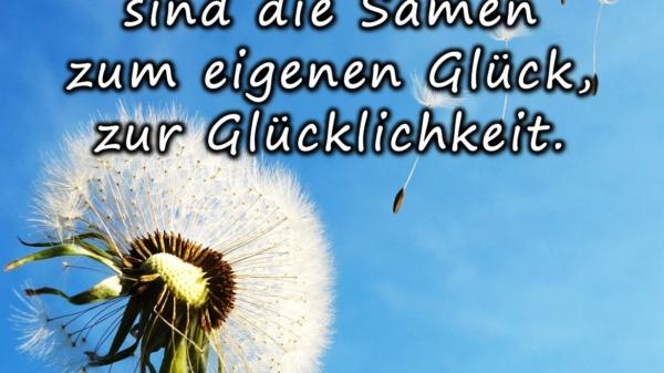Wünsche und Träume sind die Samen zum eigenen Glück, zur Glücklichkeit - BewusstSEINs Wege der Glücklichkeit, Marion Dammberg, BewusstSEINs Life Coach