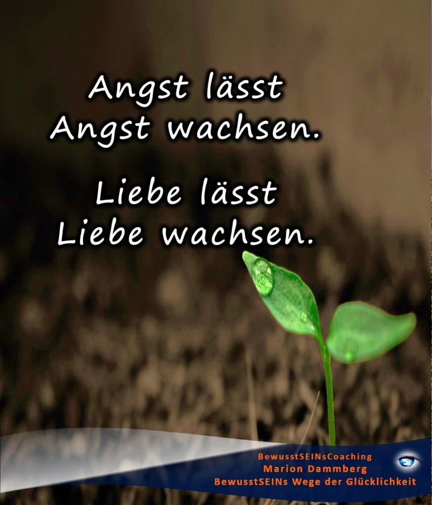 Angst lässt Angst wachsen. Liebe lässt Liebe wachsen. - BewusstSEINs Wege der Glücklichkeit, Marion Dammberg, Bewusstseins-Life-Coach