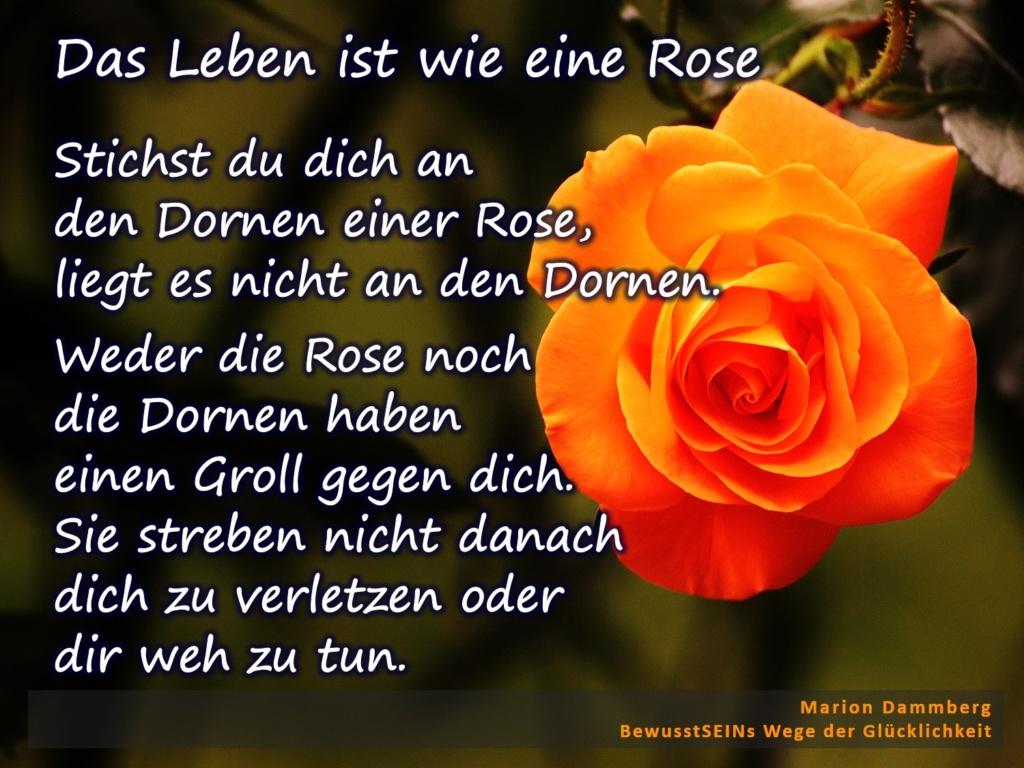 Stichst du dich an den Dornen einer Rose, liegt es nicht an den Dornen. Weder die Rose noch die Dornen haben einen Groll gegen dich. Sie streben nicht danach dich zu verletzen oder dir weh zu tun. - BewusstSEINs Wege der Glücklichkeit, Marion Dammberg, BewusstSEINs Life Coach