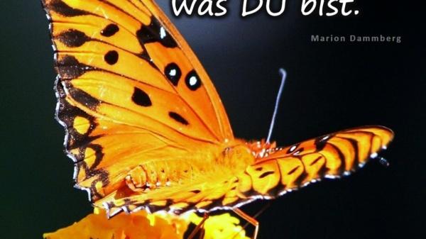 Werde zu dem was DU bist. - BewusstSEINs Wege der Glücklichkeit, Marion Dammberg, BewusstSEINs Life Coach